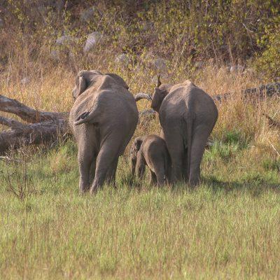 Tiere im Corbettnationalpark