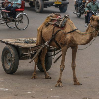 auch ein Verkehrsteilnehmer in Jaipur