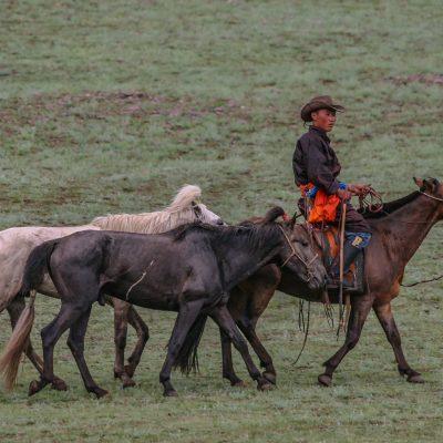 Rennpferde am Nadaam Fest